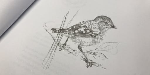 Bird & Botanical Sketching Workshop
