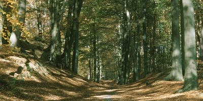 22km Near Brussels through the Zonienwoud forest!