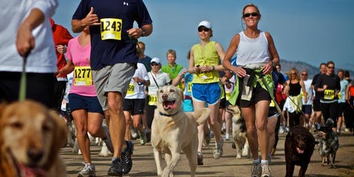 Doggy Fun Run