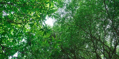 First Aid for Forestry (FAWR + F) Requalification - 2 day course -Bournemouth, Dorset