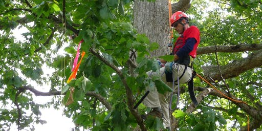 2019 Indiana Arborist Association Tree Climbing Championship