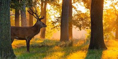 Richmond Park Wildlife - Photography Workshop