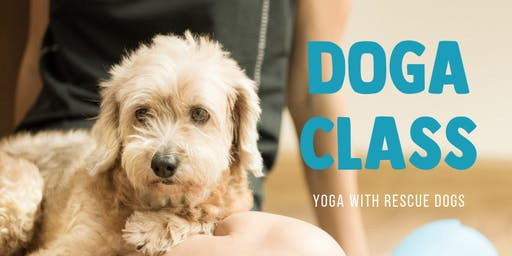 Doga - Yoga with Rescue Dogs