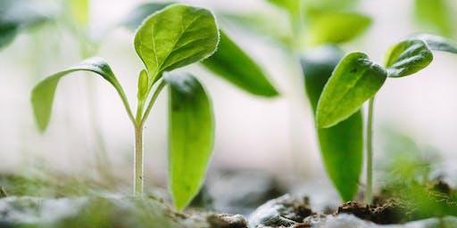 Savez-vous planter des haricots à la mode de chez nous?/ How to plant beans