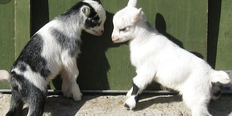 Goat Yoga & Snuggling by Farmhouse Living Fairs  tickets