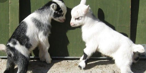 Goat Yoga & Snuggling by Farmhouse Living Fairs
