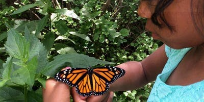 The Monarch and Its Migration with Doug Taron