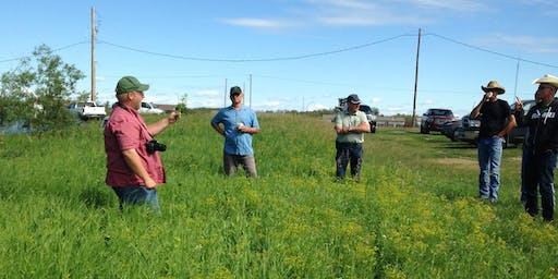 Invasive Plants of the Meewasin Valley Identification Workshop