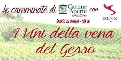 Le camminate di Cantine Aperte - I vini della vena del Gesso