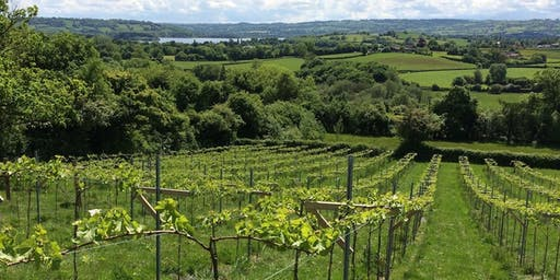 Limeburn Hill Vineyard Tour and Tasting