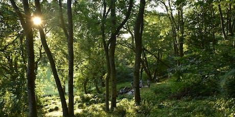 A Midsummer Sunset: Campfire & Gentle Revelrytickets