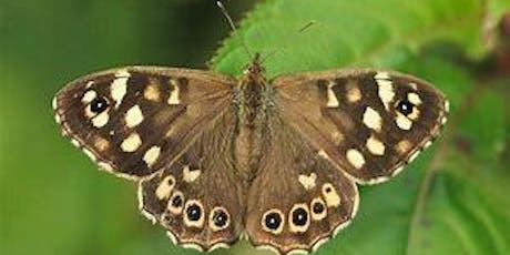 Butterflies Bugs and Beasties (Marden Quarry) tickets