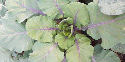 Garden Educator Training Series Part II (Manatee County)
