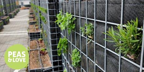 Visite de la ferme potagère Peas&Love@Domus à Rosny-sous-Bois billets