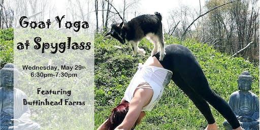 Goat Yoga  at Spyglass June 19