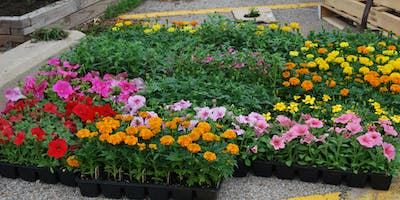 Downtown Flower Planting and Clean Up