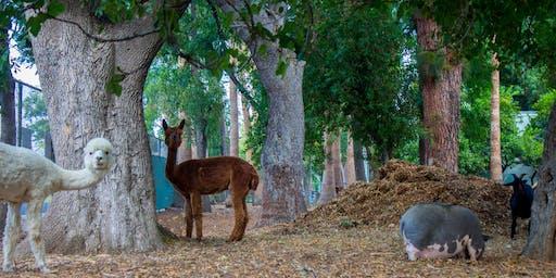 Twilight Feast at the Farm