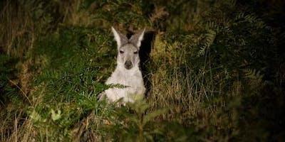 Briars After Dark Wildlife Walk
