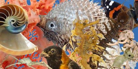 Animal Tails: Underwater Worlds tickets