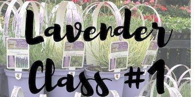 Lavender Weekend- Lavender Class #1