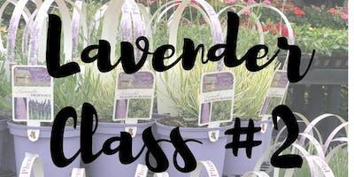 Lavender Weekend- Lavender Class #2