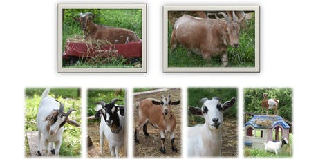 Little Earth Keepers Kinder Gardening - Goat Yoga for Kids & More Farm Fun!!! tickets
