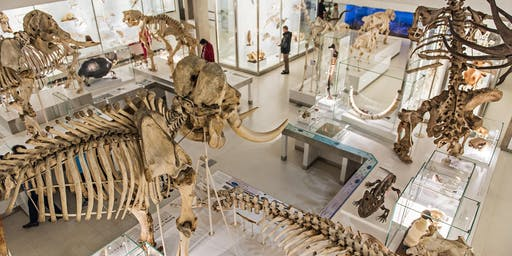 Exhibition tour: Evolution as Inspiration