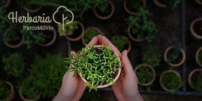 Herbaria: Un viaggio scientifico alla scoperta della biodiversità vegetale