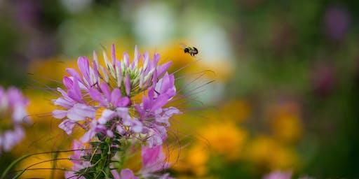 Public Flower Harvest - Hendrick Farm
