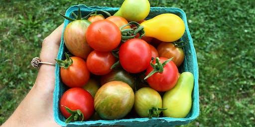 Public Tomato Harvest