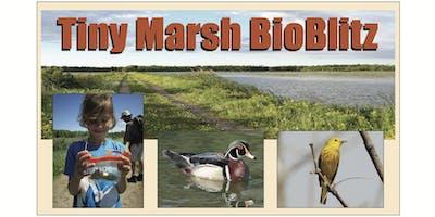 Tiny Marsh Bioblitz