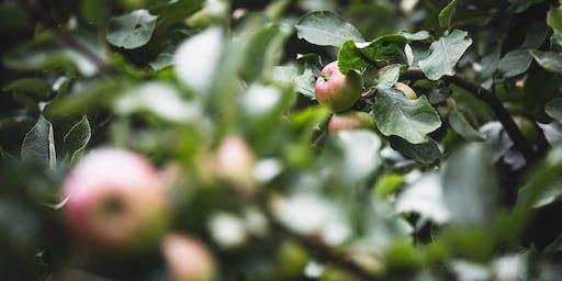 Orchard Bathing (London)