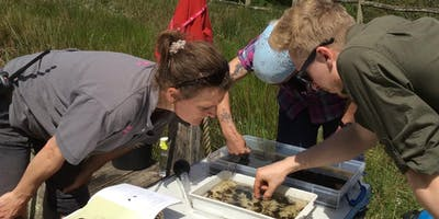 Introduction to Freshwater Pollution Monitoring