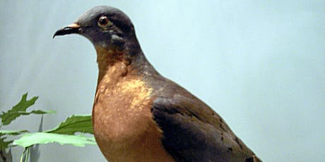 Presentation: The Passenger Pigeon with Mark Peck tickets
