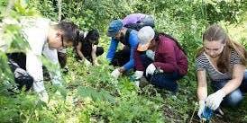 Forest Crew Volunteer Day