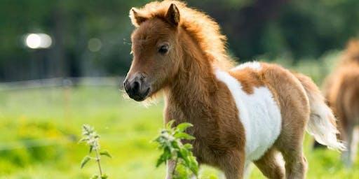 My Mini Pony Party Summer Camp