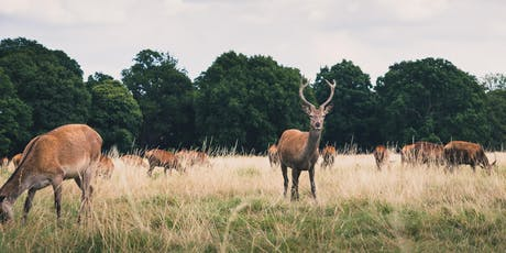 Mindful morning in Richmond Park tickets
