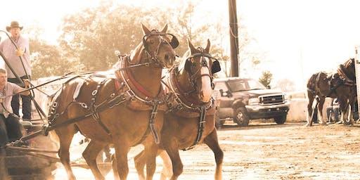 Draft Horse Pulls @ the Lake Odessa Fair