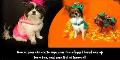 Holl-o-ween Dog Costume Pawtee
