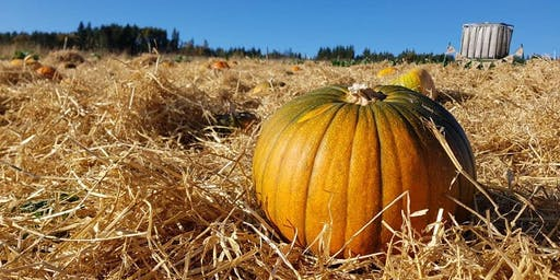 Loch Ness Pumpkins, Corrimony Farm - Session E
