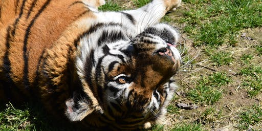 June 2019 Big Cats Open House (Free Event), 6/15, 3pm to 5pm