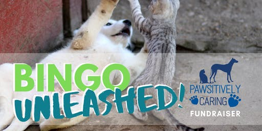 BINGO Unleashed - a Pawsitively Caring Fundraiser