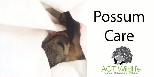 Possum Care