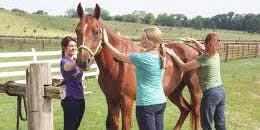 Women & Horses & Wine, What an Afternoon!!