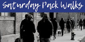 FREE Saturday Pack Walks with Solid K9 Training!