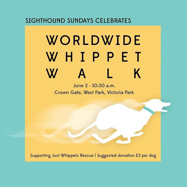 Sighthound Sundays x Worldwide Whippet Walk image