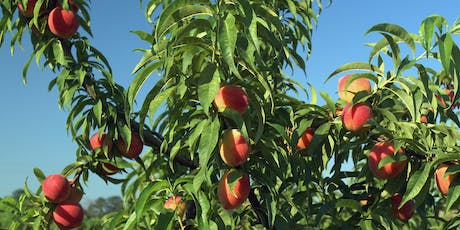 Lunch & Learn: Growing Fruit Trees in Your Yard tickets
