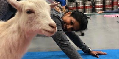Goat Yoga at WagsPahhhhhhhk!