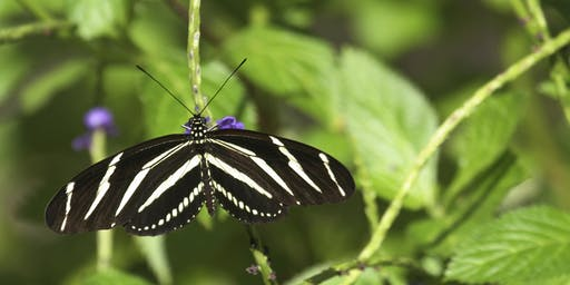 Landscape Insects: The Good, The Bad, and The Ugly