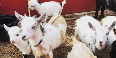Goat Yoga Houston Friendswood